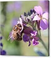 Honeybee On Purple Wall Flower Canvas Print