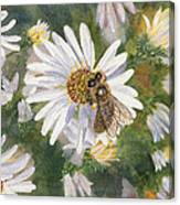 Honeybee On White Aster Canvas Print