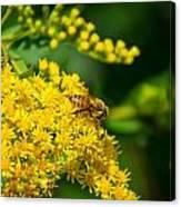 Honeybee On Yellow Canvas Print