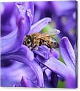Honeybee Peeking Out Canvas Print