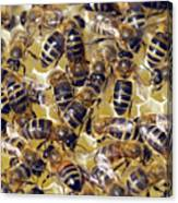 Honeybees On Honeycomb Canvas Print