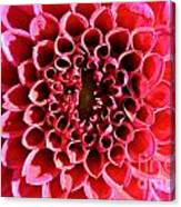 Honeycomb Dahlia Canvas Print