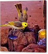 Honeyeaters Drinking Water Canvas Print