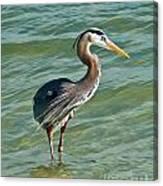 Honeymoon Island Heron Canvas Print