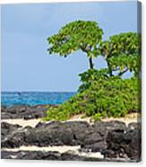 Honolulu Hi 8 Canvas Print