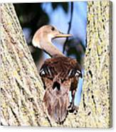 Hooded Merganser Duck Canvas Print