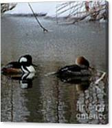 Hooded Merganser Mates Canvas Print