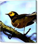 Hooded Warbler - Img 9290-002 Canvas Print