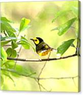 Hooded Warbler - Img_9274-007 Canvas Print