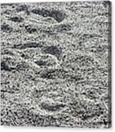 Hoof Prints In Sand Canvas Print
