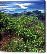 Hookipa Beach Flowers Maui Hawaii Canvas Print