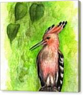 Hoopoe Canvas Print