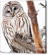 Hoot Hoot Canvas Print