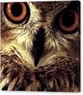 Hoot Owl Canvas Print