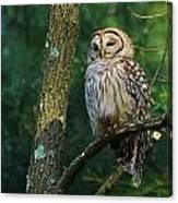 Hootie Barred Owl Canvas Print