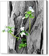 Hope... From Decay New Growth Canvas Print
