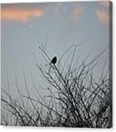 Hope Perched  Atop Canvas Print