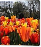 Hopping Hot Tulips Canvas Print