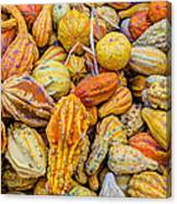 Hordes Of Gourds Canvas Print
