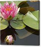Horizontal Lily And Bud Canvas Print