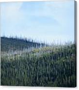 Horizontal Renewal Canvas Print