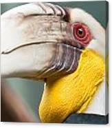 Hornbill Bird Portrait Closeup Canvas Print