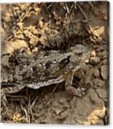 Horned Lizard   #8888 Canvas Print