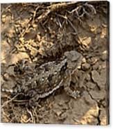 Horned Lizard   #8903 Canvas Print