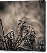 Hornet And Thorn - B Canvas Print