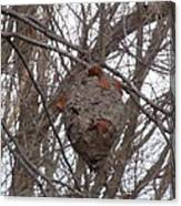 Hornets Nest East Canvas Print