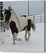 Horse 03 Canvas Print