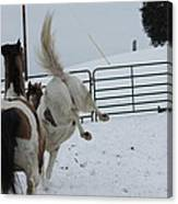 Horse 13 Canvas Print