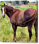 Horse 5 Canvas Print