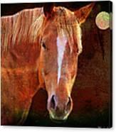 Horse 7 Canvas Print