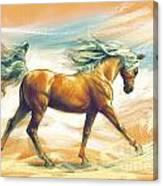 Horse Akalteke Canvas Print