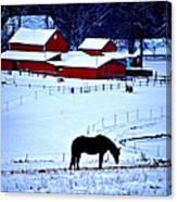 Horse Alone Canvas Print
