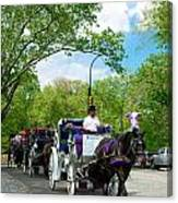 Horse And Carriages Central Park Canvas Print