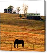 Horse And Farm By Jan Marvin Canvas Print