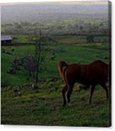Horse And Farmhouse Canvas Print