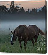 Horse And Fog Canvas Print
