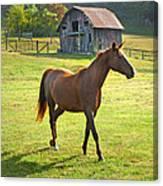 Horse And Old Barn In Etowah Canvas Print