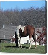 Horse And Shadow Canvas Print