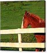 Horse And White Fence Canvas Print