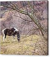 Horse And Winter Berries Canvas Print
