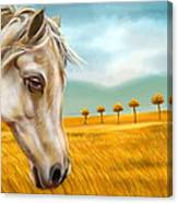 Horse At Yellow Paddy Field Canvas Print