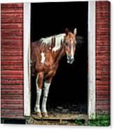 Horse - Barn Door Canvas Print