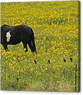 Horse  Birds  And Flowers   #8520 Canvas Print
