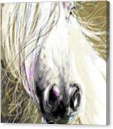 Horse Blowing In The Wind Canvas Print