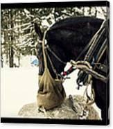 Horse Cinema Style Canvas Print