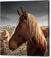 Horse Composition Canvas Print